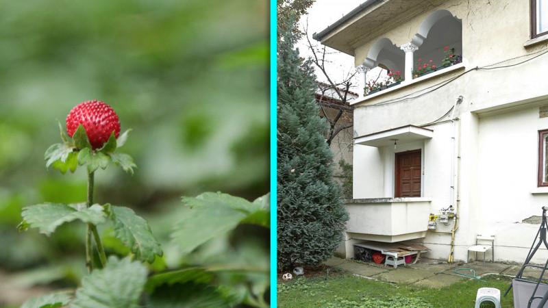 Jumatate vila D+P+1+Pod, curte 377 mp, Domenii Casin